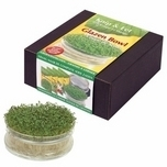 sowing-cress-Indoors-set-glass