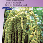 Love-Lies-Bleeding Green Cascade (Inca Wheat) - Amaranthus