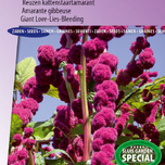 Love-Lies-Bleeding Dreadlocks - Amaranthus