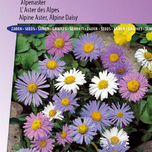 Alpine Aster of DaisyLargeflowered Hybrids