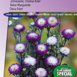 China aster Garden Hit Blue tipped white