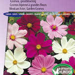 Mexican Aster, Garden Cosmos Sensation Mix