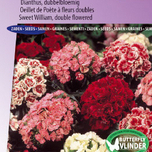 Sweet William Double Choice Mix