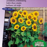 Sunflower semi tall Prado Gold