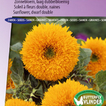 Sunflower dwarf double Teddy Bear
