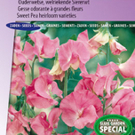 Sweet pea Janet Scott 1903 (Heirloom variety)