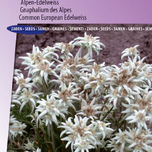 Edelweiss, Common European