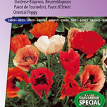 PoppyOriental Poppy Pizzicato Mix