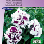Petunia, double flowered F1 Purple Pirouette