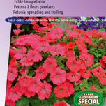 Petunia, spreading and trailing F1 Easy Wave Red