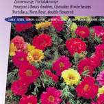 Portulaca, Moss Rose double Mix
