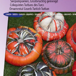 OrnementalGourd Large Fruited Turkish Turban
