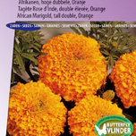 Marigold, African tall double Hawaii (orange) - Tagetes