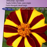 Marigold, French dwarf single Mr. Majestic - Tagetes