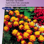 Marigold, French dwarf double Orange Flame - Tagetes