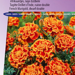 Marigold, French dwarf double Bolero