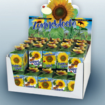 Greengift Sunflower 40 pcs in showbox