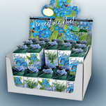 Greengift Forget-me-not 40 pcs in showbox