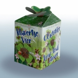 GreengiftLucky four leaf clover 40 pcs in showbox