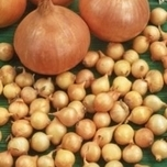 Onion Sets Sturon (250gr)