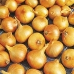 Shallot sets Yellow Moon (250gr)
