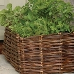 Burgon & Ball planter baskets