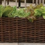 Natural Willow Salad Planter - Burgon & Ball