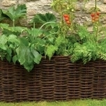 Natural Willow Vegetable & Tomato Basket - Burgon and Ball