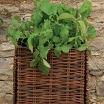 Natural Willow Potato Planter - Burgon & Ball