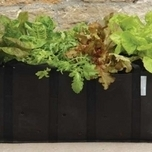 Extra Large Salad Planting Bag - single pack - Burgon and Ball