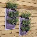 Verti-Plant Lavender - 2 pack - Burgon and Ball