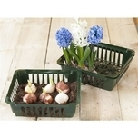 Planting bulbs basket 250x210x75 mm. - Nature