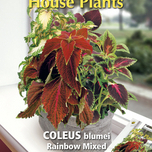 house-plants-coleus-rainbow-mix