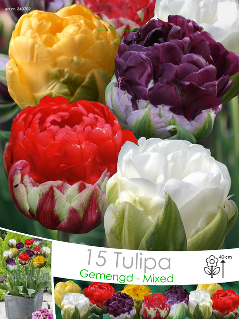 Tulips Double Ice Cream Mix For Sale Buy Online For Only