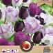 Tulips Purple Passion Mix