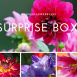 Summer Flowerbulb Surprise pack 3