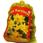 Daffodils Botanical (XL-Pack) - Narcissus