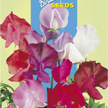 Sweet Peas Coloram