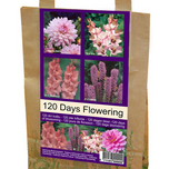 Flowers for 120 Days