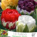 Tulips Double Ice Cream Mix