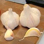Garlic Sativus