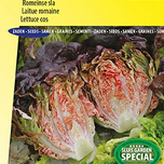 Lettuce Romaine Little Gem Intred