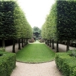 Common Hornbeam - Carpinus Betulus, hedge 10x (200CM)
