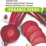 Beetroot, Red Gardenbeet Detroit dark red 2 Storuman EKO