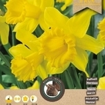 Daffodils Large Cupped Yellow