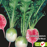 Radish chinese Red Meat