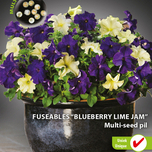 Fuseable multi-seed pil 'Petunia Blueberry Lime Jam F1'