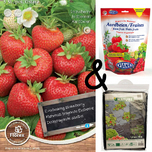 Strawberry Ostara Cultivation package