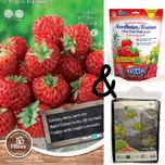 Strawberry Framberry Cultivation package