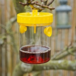 Wasp trap - Nature